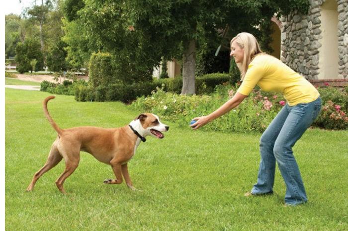 Clôture de jardin : comment éviter qu\'un chien fugue ? Conseils